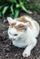 Thinking (Velvet Pines) Tags: cat outdoor kitten kittie d80 50mm nikon