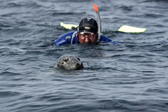 Close encounter (mothclark62) Tags: trip sea wild tourism nature st swimming swim mammal island grey islands coast boat marine rocks wildlife shoreline tourist tourists snorkeling seal seals martins eastern mammals isles scilly scillies pinipeds piniped menawethan
