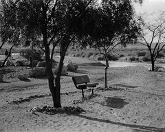 The park (Shot by Newman) Tags: trees arizona people bw southwest 35mm river daylight view coloradoriver parkbench ilford ilforddelta400 mojavedesert walkingpath shotbynewman