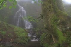 Parque natural de #Gorbeia #Orozko #DePaseoConLarri #Flickr -095 (Jose Asensio Larrinaga (Larri) Larri1276) Tags: 2016 parquenatural gorbeia naturaleza bizkaia orozko euskalherria basquecountry
