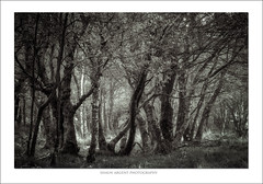 Brimham Birch (shaun.argent) Tags: morning trees tree texture nature woodland t mono spring woods flora seasons grasses nidderdale shaunargent