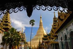 Golden Land (pdxsafariguy) Tags: shwedagonpagoda yangon myanmar burma pagoda gold golden travel stupa buddhism temple asia southeastasia tree clouds tomschwabel