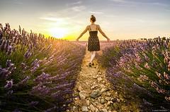 Plateau de Valensole (Lud0fr) Tags: valensole lavande love sunset flowers landscape people girl nikon tamron sky blue clouds rocks