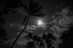 _JAM6647 (Jamil D750) Tags: miami night nighttime palm trees beach south full moon nikon