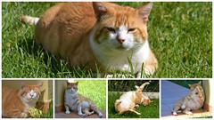 Gino, antes Pezuotas. (Yoly_Ali.) Tags: collage cat gato gatto