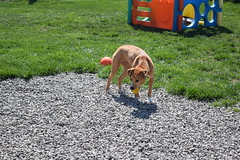 2016-05-07 10.21.03 (A Place for Paws) Tags: foster apap playday