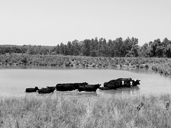 16 jun 16 (4) (beihouphotography) Tags: county summer white black water monochrome landscape outdoors pond cows off kansas fujifilm jefferson herd x30 cooling