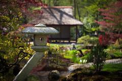 clingendael-7753 (Arie van Tilborg) Tags: japanesegarden hague thehague clingendael japansetuin clingendaelestate landgoedclingendael arievantilborg