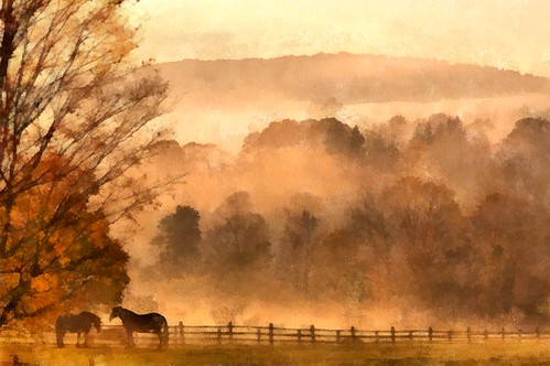 Horses in Foggy Mist