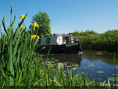 Summer on the Royal (bbusschots) Tags: ireland iris summer flower boat canal wildflower maynooth kildare yellowflagirispseudacorus