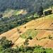 I profili coltivati delle colline verso Almolonga
