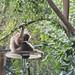 monkey - toronto zoo - 1
