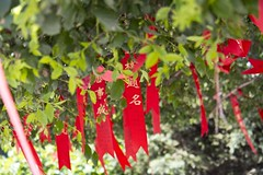 Wish Well (Snowbirdkong) Tags: china park pink trees summer people flower tree green leaves canon garden temple er bin confucius ha lin zhao f28 harbin wishing 1755mm 60d zhaolin