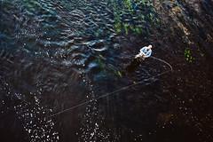 Fisherman #229/365 (A. Aleksandraviius) Tags: macro ex river fisherman nikon sigma apo ii 365 70200 f28 dg 70200mm nemunas project365 hsm 365days d700 228365 nikond700 3652013