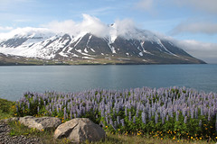 Fjord Olafsfjordur (Maillekeule) Tags: iceland fjord islande olafsfjordur