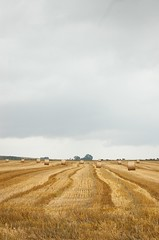 Messis version #2 (yellowgreywolf) Tags: sky field yellow horizon harvest hayrolls messis