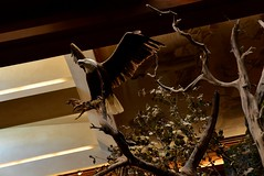 Bald Eagle (Adventurer Dustin Holmes) Tags: baldeagle taxidermy springfieldmissouri bassproshops bassproshop springfieldmo bassproshopsoutdoorworld bassproshopoutdoorworld