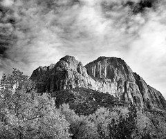zion national park just inside part october 24 2013 5 bw (houstonryan) Tags: park autumn color art fall colors leaves saint st yellow river print landscape photography landscapes utah george october colorful driving photographer open nps ryan oct parks houston system virgin southern national photograph 24 zion dixie cottonwoods 2013 houstonryan