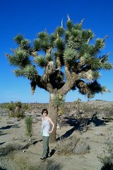 Joshua Tree. (Dena Michele Rosko) Tags: california tree me nature desert joshuatree dirt treehugger vacay aridclimate streamzoo