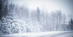 Winter! (Kristina_Servant) Tags: road winter snow canada december quebec hiver route neige winterstorm dcembre tempte