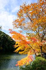 -kyoto Arashiyama Japan (J.D Chen ) Tags: trip travel autumn vacation japan maple nikon kyoto tour jr arashiyama    osaka jetstar  backpacker f28 d800    1424