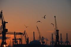 Sonnenuntergang Hamburger Hafen 2 (Maexeltaexel) Tags: sunset sea holiday sunrise sonnenuntergang harbour gull urlaub hamburg baltic northsea hafen mwe landungsbrcken nordsee sonnenaufgang ostsee kiel elbe flensburg