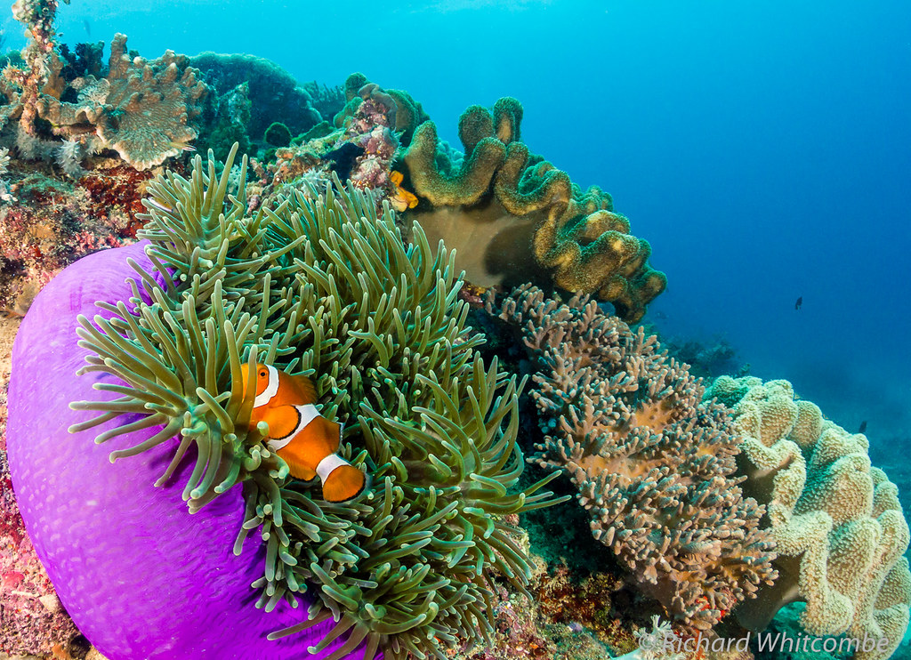 Caribbean Sea Animal Life: The World's Best Photos Of Behaviour And Snorkeling