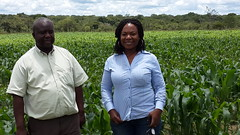 Drought-tolerant Discussion (CIMMYT) Tags: women farmers seed hybrid maize zambia lusaka droughttolerant dissemination seedcompany dtma