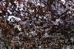 spring in the city (*F~) Tags: city flowers cidade tree primavera portugal spring lisboa branches printemps graa urbantree