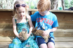 IMG_3342 (drjeeeol) Tags: bunny bunnies farmersmarket katie charlie triplets toddlers pettingzoo 2014 5yearsold 66monthsold