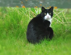 Flabbergasted (nikkorglass) Tags: black home cat dxo nik cb f28 hemma katt svart d300 70200f28