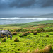 The dark horse, Liscannor, Ireland