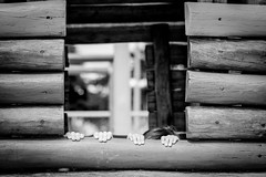 (Debora Marinho ;) Tags: morning family flowers parque brazil portrait love colors smile playground braslia brasil truck canon cores mom fun ensaio 50mm hug df kiss funny dad play photoshoot sister brother retrato amor beijo run famlia irmo sorriso abrao 18 pai domingo me parquinho headband careta manh giovani irm caminho taguatinga ceclia apaixonados 18135 t2i taguaparque taguapark hricka
