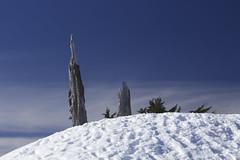 Landmark (Dex Horton Photography) Tags: blue winter sky usa snow tree ice clouds dead bestof wa washingtonstate artistpoint mtbakerskiarea whatcomcounty huntoonpoint dexhorton