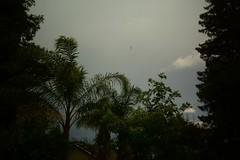 Clouds (bcr160) Tags: trees storm pine clouds timelapse backyard nikon time sigma palm 1020 lapse d7100 kl0 bcr160