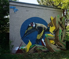 Painting corners in Edinburgh! (paco graff) Tags: bird art painting scotland edinburgh goldfinch graffitiart pacograff