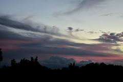 End of a day (Dreaming of the Sea) Tags: nikon d7200 dusk trees twilight tamron sunset clouds pink pinksunset storm sky blue bluesky bundaberg australia tamronsp2470mmf28divcusd 2470mm palmtrees 1000v40f topf25 1500v60f