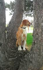 19/52 Weeks for Skye (ginam6p) Tags: dog toronto tree skye mutt explore 2016 52weeksfordogs