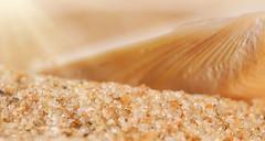 ...The sands of time ..... (Elisafox22 Internet On/Off at the moment) Tags: elisafox22 sony nex7 50mmf28 macro carlzeiss touit makro planar lens time hmm macromondays seasand sunshine seashell texture light elisaliddell2016
