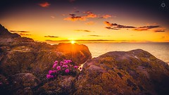 Life on the Rocks (Augmented Reality Images (Getty Contributor)) Tags: light sunset shadow sea flower water sunshine clouds canon landscape scotland rocks colours cliffs adobe editing lightroom morayshire portknockie leefilters