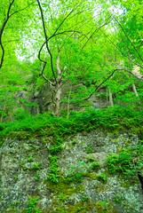 Forest (wackybadger) Tags: tree wisconsin forest nikon rockface grantcounty wyalusingstatepark wisconsinstatepark nikond60 wisconsinstatenaturalarea nikon1855mmf3556gafsvr sna89 wyalusingwalnutforestsna