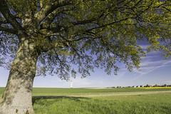 under the shade of a tree (mamuangsuk) Tags: tree sunshine country ombra ombre albero arbre sunnyday 6d 1740l grosdevaud goumoens mamuangsuk tourdeaudegoumoens chateaudeaugoumoenslaville underthetreeshade blueskygreenmeadows