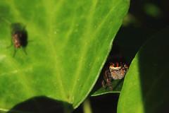 Come closer (Loconauta) Tags: macro spider macrodreams