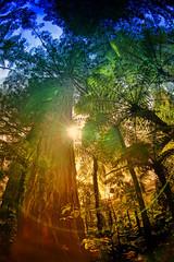 Primordial Forest (/\ltus) Tags: newzealand rotorua sony hdr 3xp internalhdr nex7