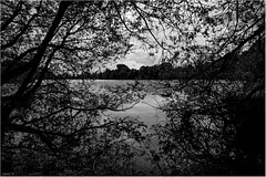 Under The Trees Across The Water (andihun65) Tags: trees blackandwhite lake water silhouette mono kent moody branches eastwell canon60d canon1585mmis
