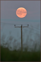Strawberry Moon 20th June 2016 (image 1 of 2) (Full Moon Images) Tags: summer moon nature strawberry wildlife bcn reserve full solstice national moonrise trust fen cambridgeshire woodwalton nnr greatfen