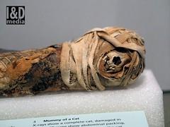 damaged mummified cat (Internet & Digital) Tags: cats ancient god hawk victorian egypt ibis horus ritual mummy isis sacrifice osirus ancientegypt offerings mummified thoth mummifiedcats