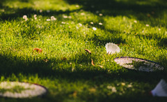 Playtime is over (Steve Majou) Tags: grass green bokeh calm badminton sun leaves leaf flowers flower park childhood playtime over