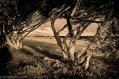 Winter evening Walk - WiIliamstown - Zeiss Loxia 35/2 - B&W (djwillia3333) Tags: sunset bw beach zeiss 35mm sony williamstown f2 topaz wintery a7ii loxia