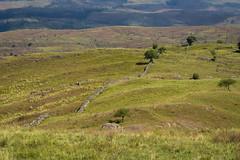 Cordoba (cuiti78) Tags: argentina el cordoba durazno